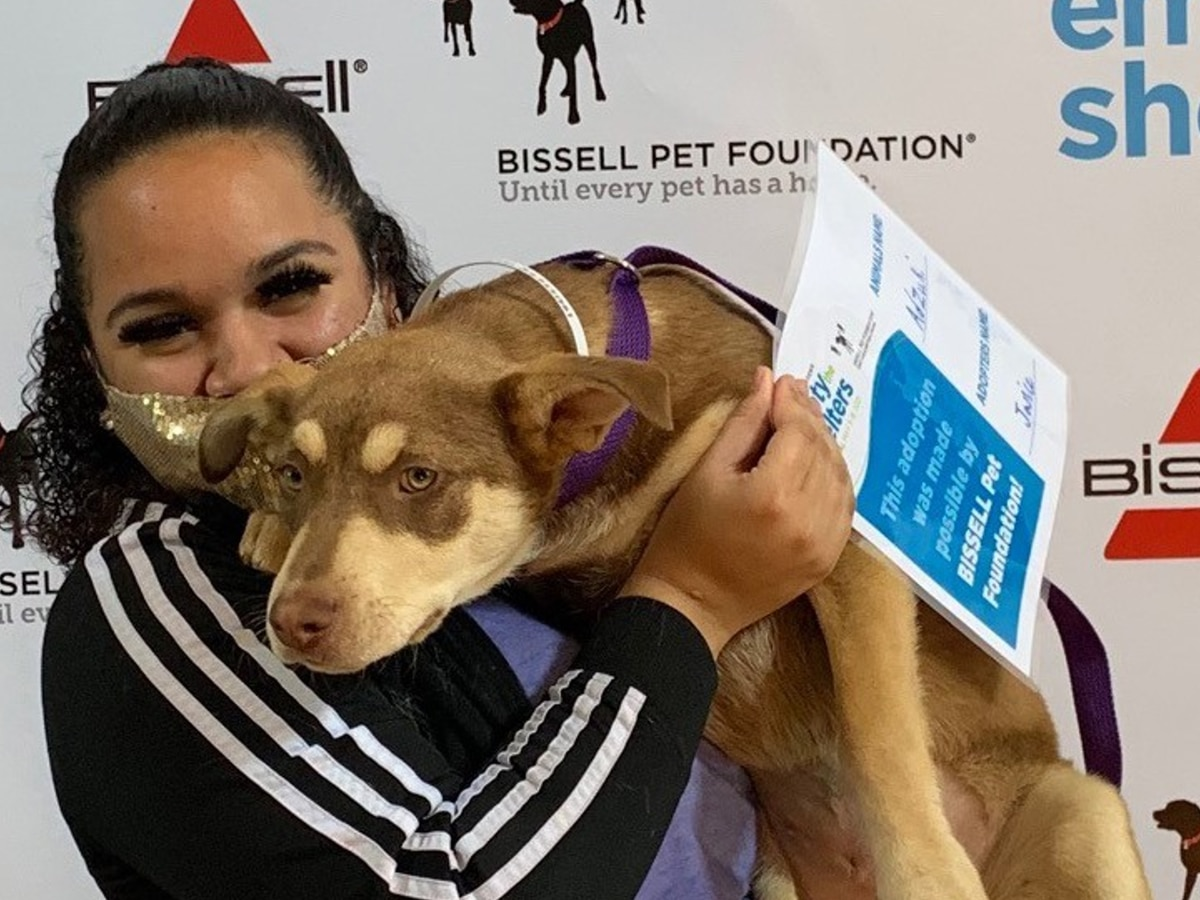 Kentucky Humane Society says 60 animals adopted during 'Empty the Shelters' event