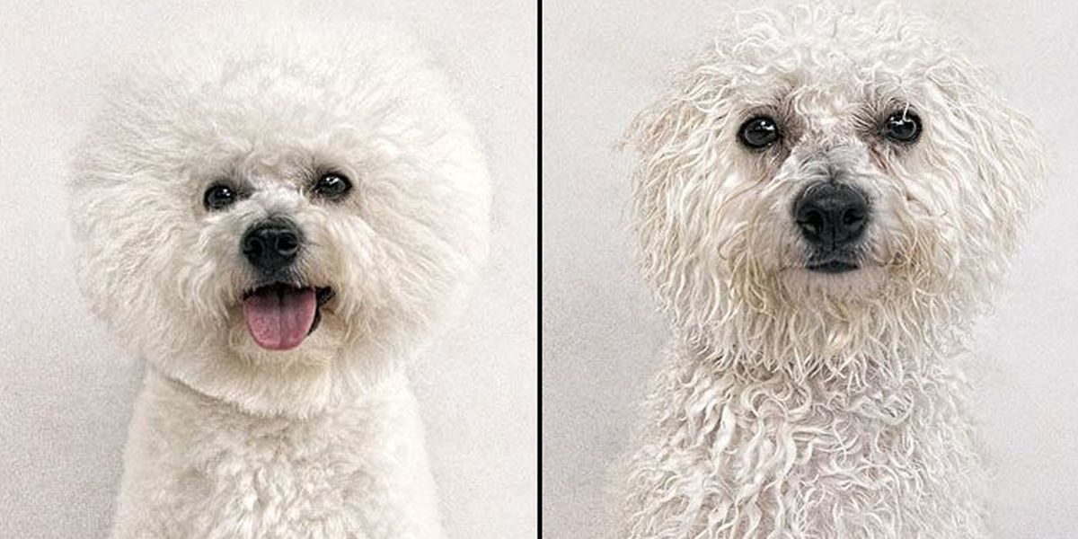 DRY DOG, WET DOG: Check out these funny photos!