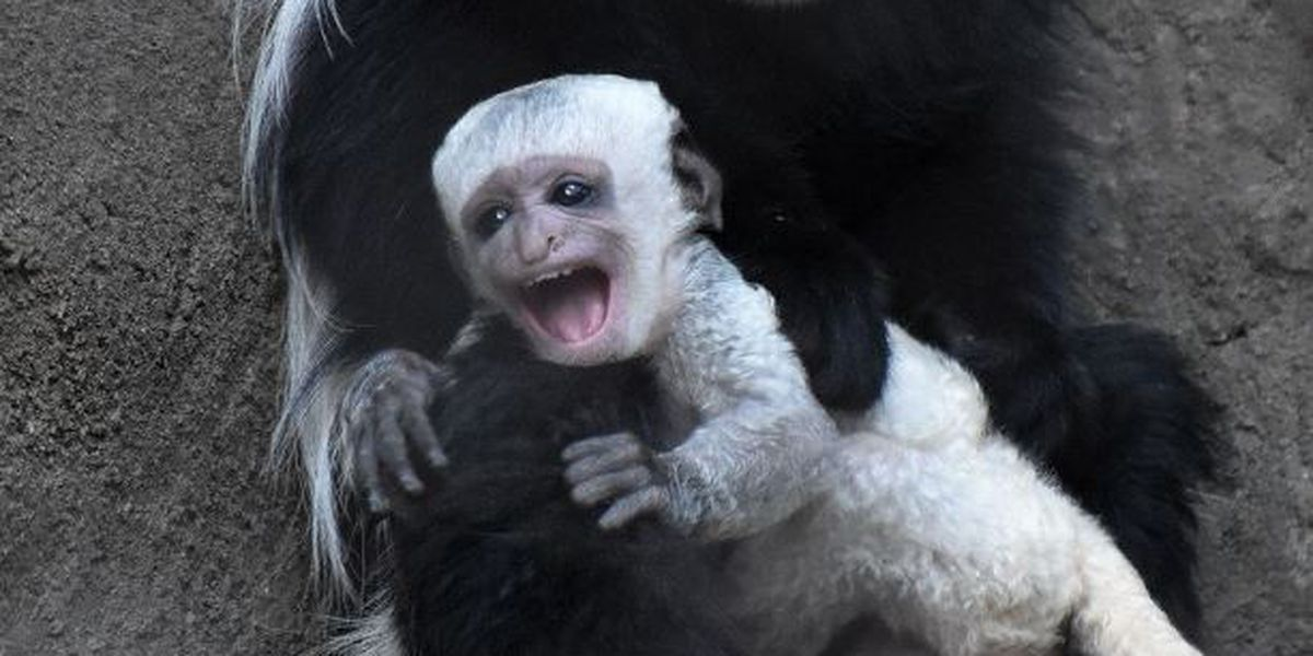 Another baby boom at the Cincinnati Zoo