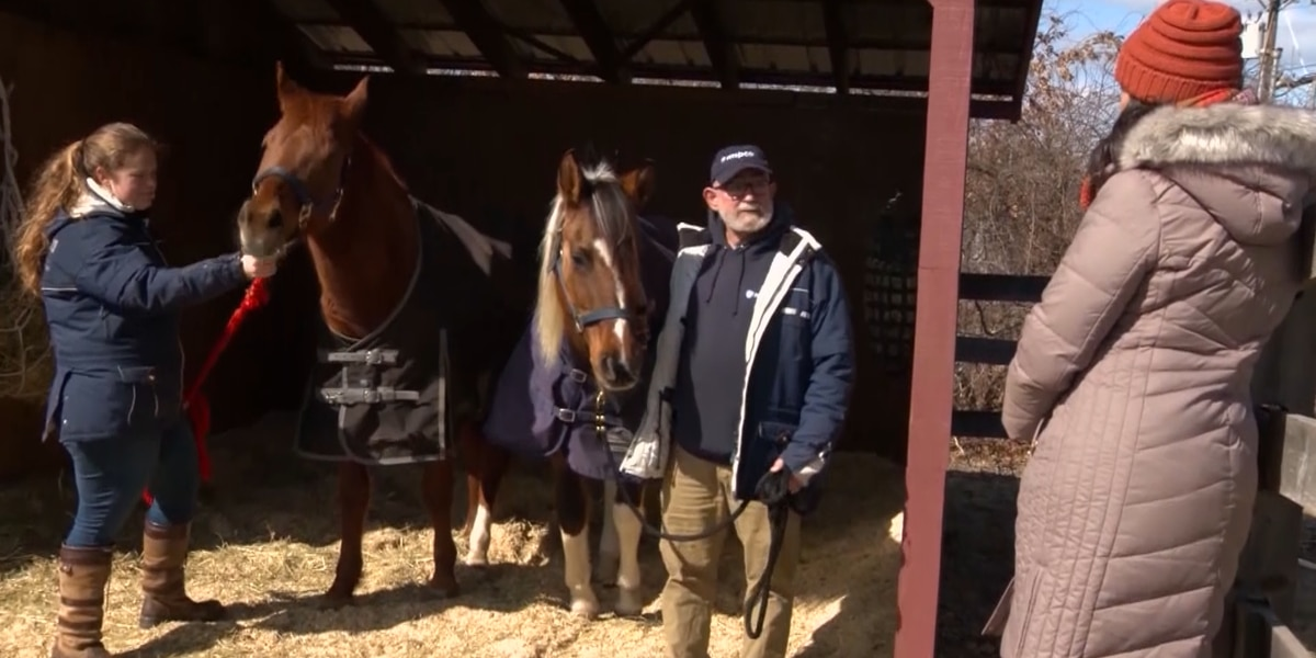 Horses living in piles of manure rescued