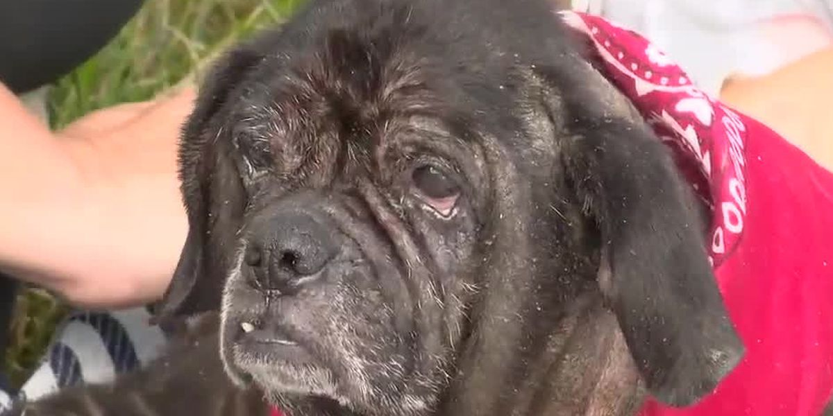 Rescue helping neglected 12-year-old dog check items off bucket list