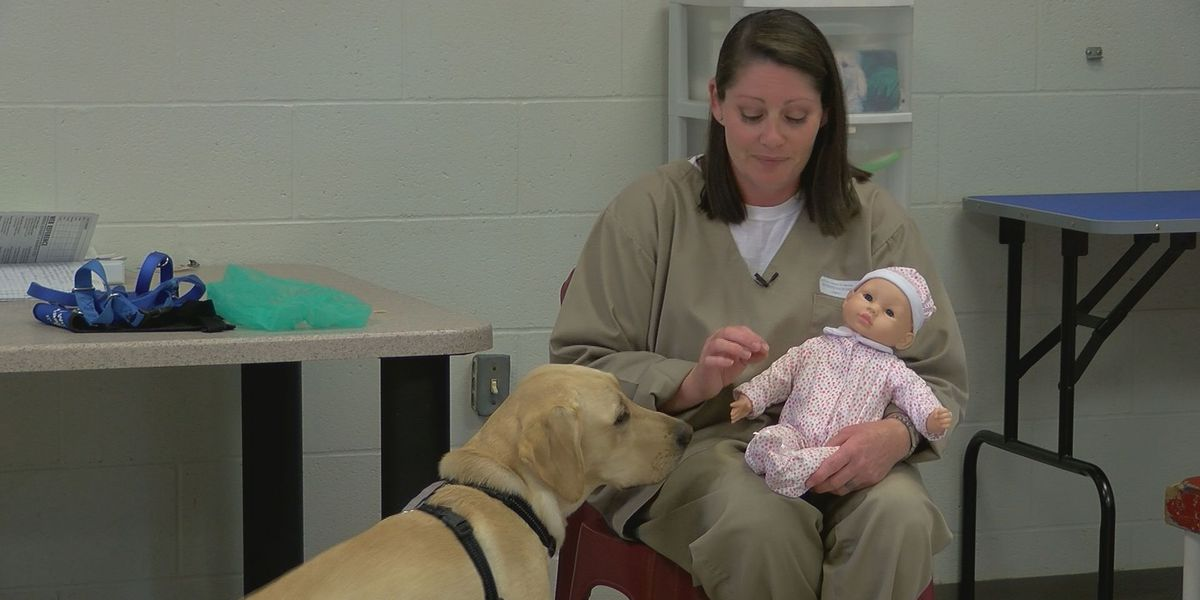 Paws with Purpose celebrates 15 years of inmates training service dogs