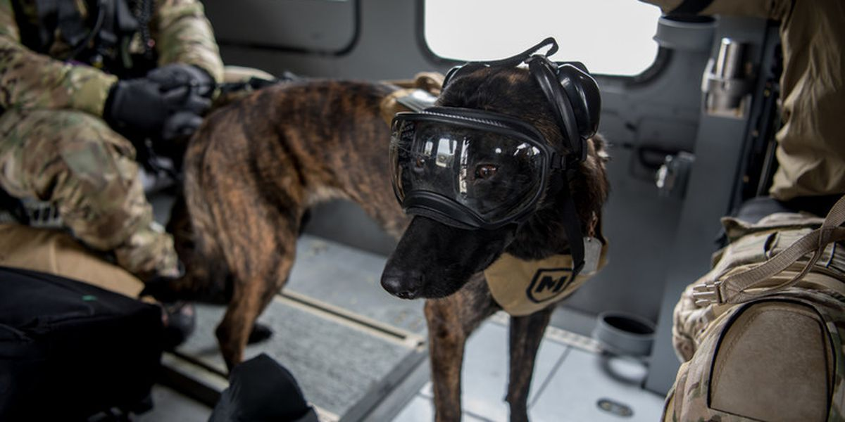 Meet Callie, the KY Air National Guard's search and rescue K-9