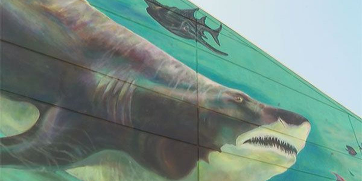 Newport Aquarium wants you to come celebrate their new baby shark doo, doo, doo doo doo