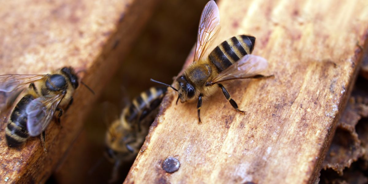 Behind the Forecast: Buzz behind weather's impact on bees