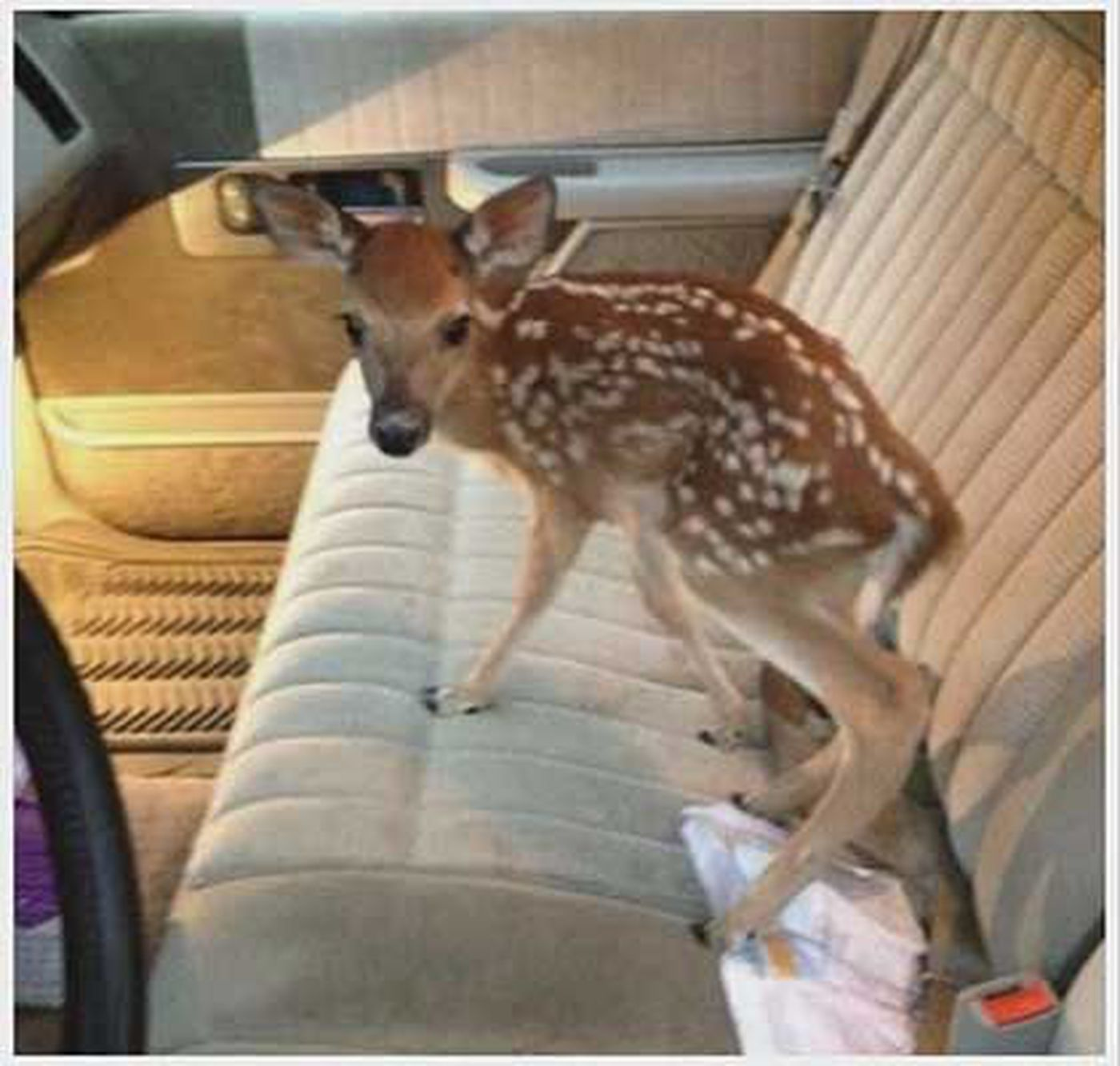 Man puts deer on leash, upsets Kentucky wildlife officials