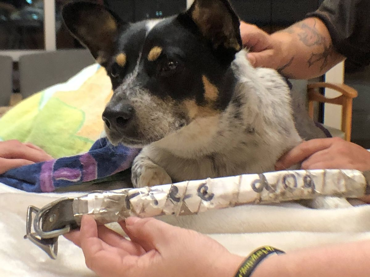 Arrow Fund caring for injured dog found on side of Kentucky road