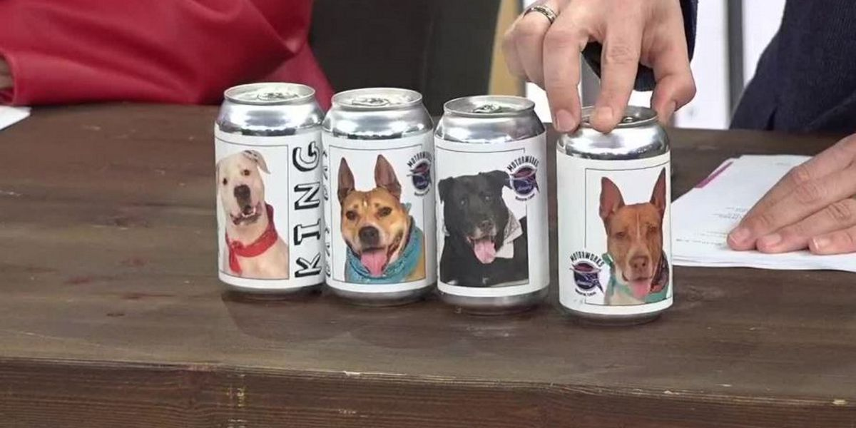 Florida brewing company collaborates with animal shelter by putting rescue dogs on beer cans