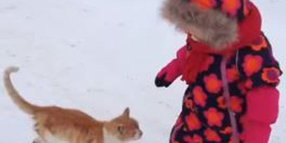 VIDEO: Cat body slams toddler in snow