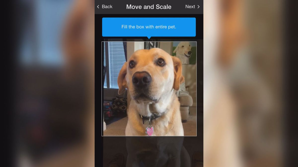 Animal Shelter Uses Facial Recognition App To Reunite Pets