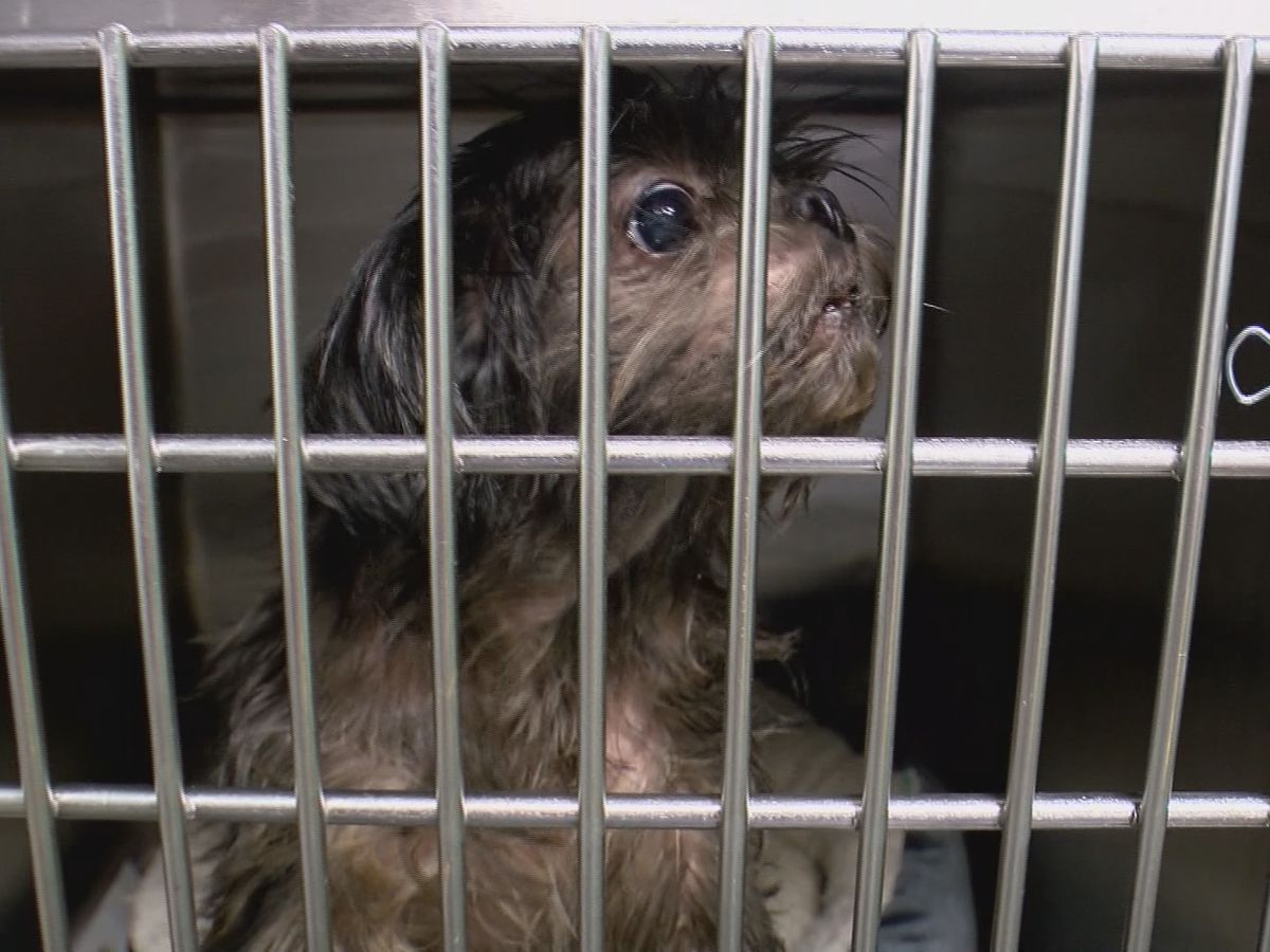 LMAS fees for impounded pets will be waived in July