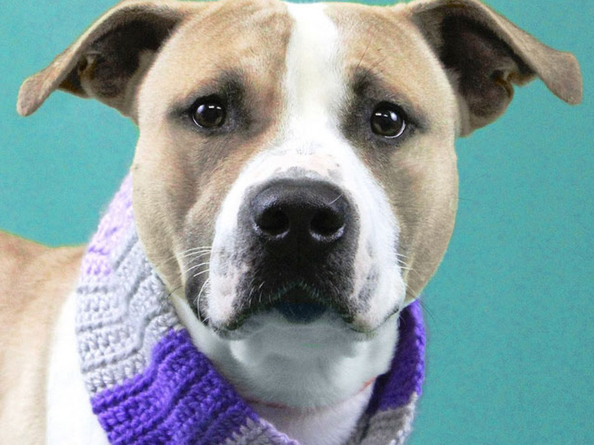 Local animal shelters reducing or eliminating adoption fees for the holidays