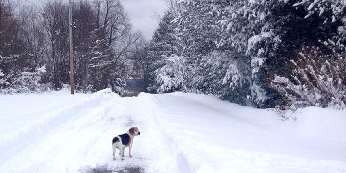 VIEWER PHOTOS: Our Facebook fans share pics of their dogs playing in the snow
