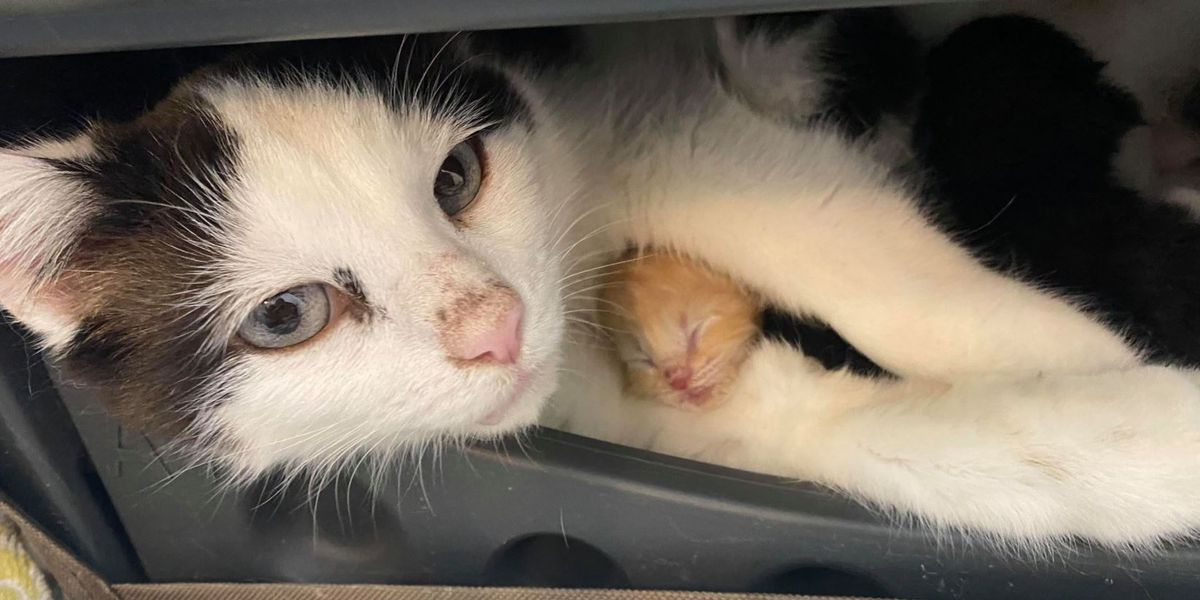 Cat gives birth to kittens in ceiling of unfinished basement; construction foreman saves the day