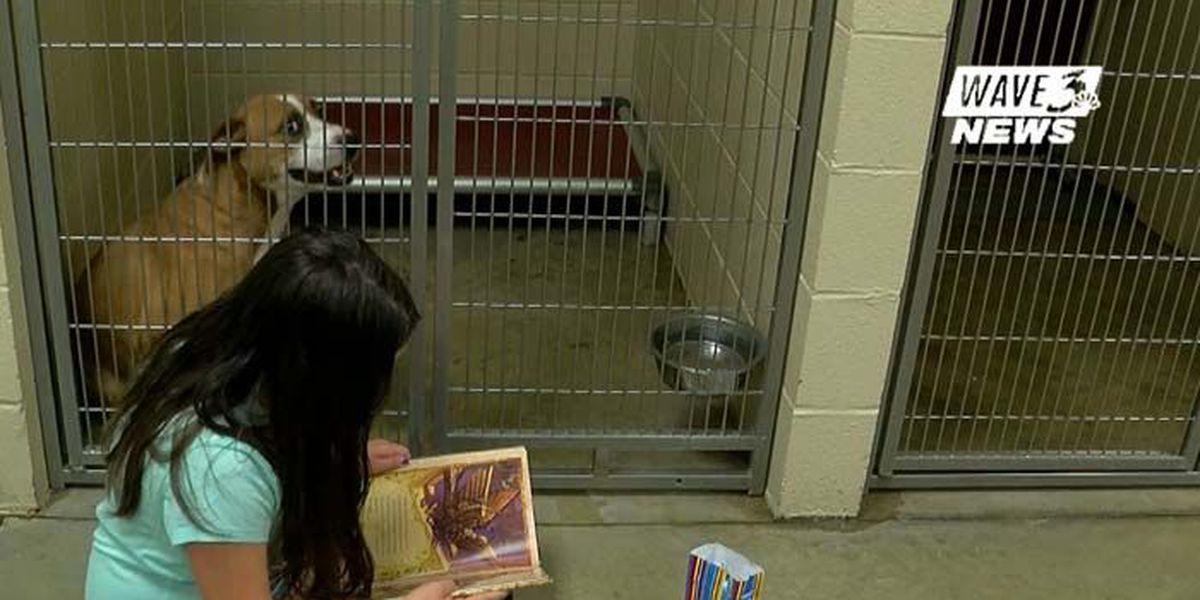 Children Practice Reading In Front Of Furry Friends