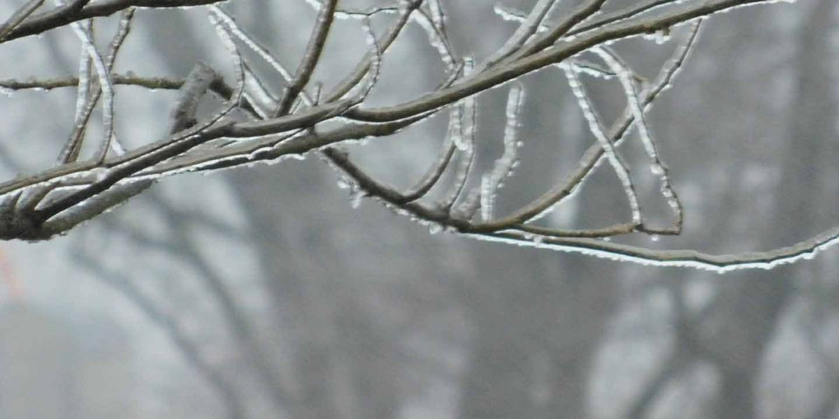 VIEWER IMAGES: Ice, snow coat WAVE Country