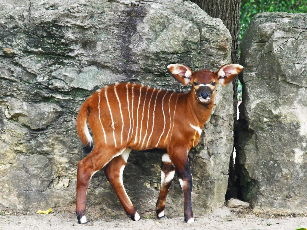 Baby bongo's name revealed