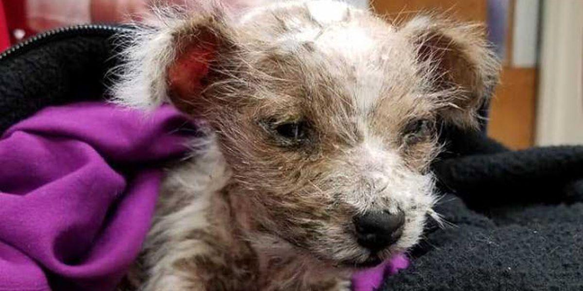 Group working to help puppy left for dead in Gallatin County, KY