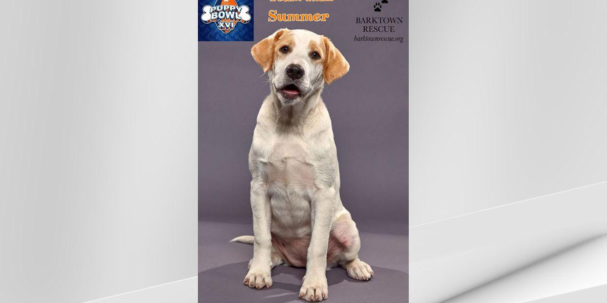 Barktown Rescue puppy chosen to play in 2020 Puppy Bowl