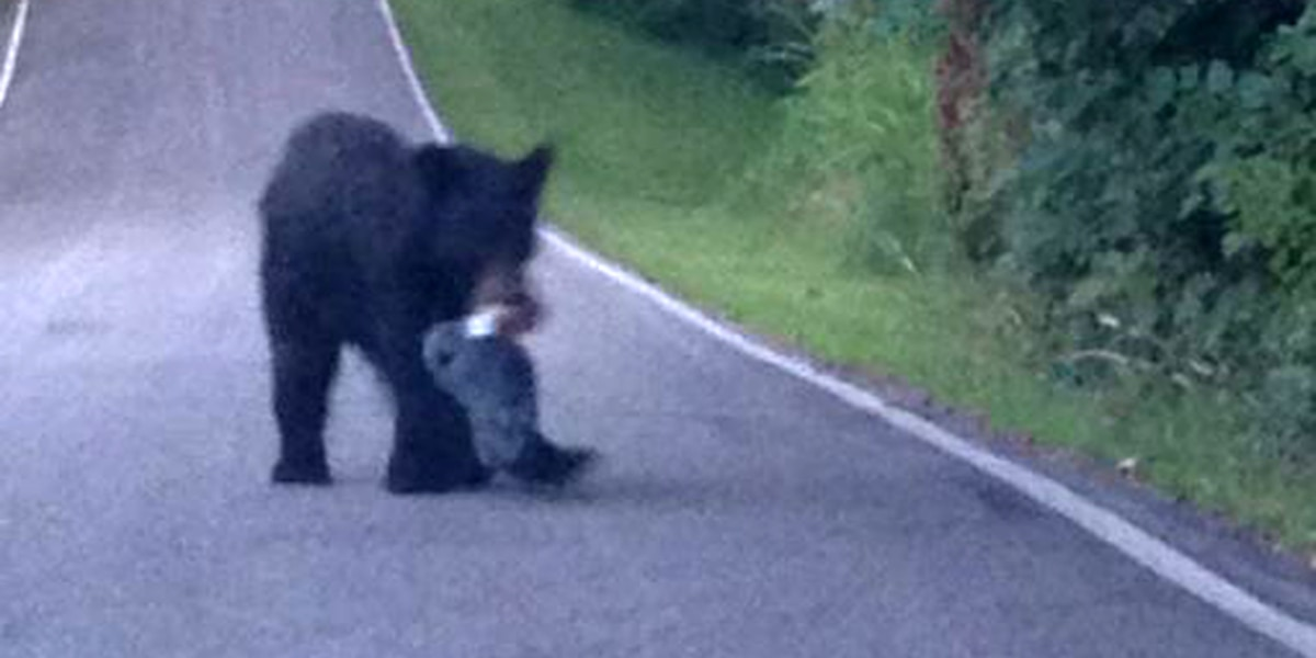 Bear believed hibernating in Indiana spotted on the move