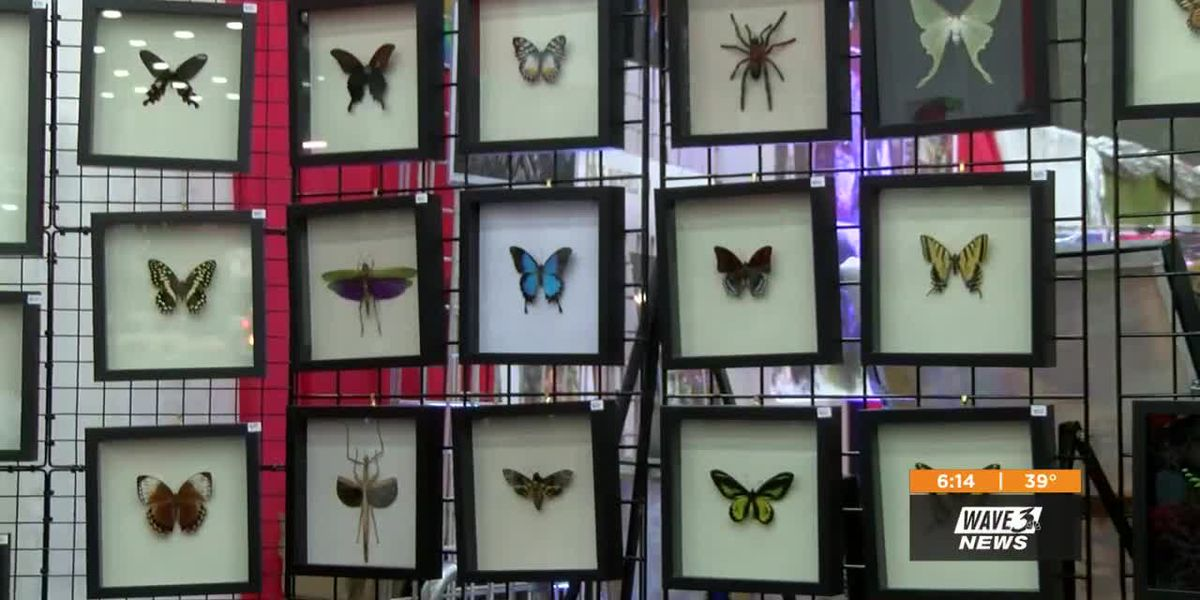 Collector sells gifts, shares passion for bugs at Christmas Expo