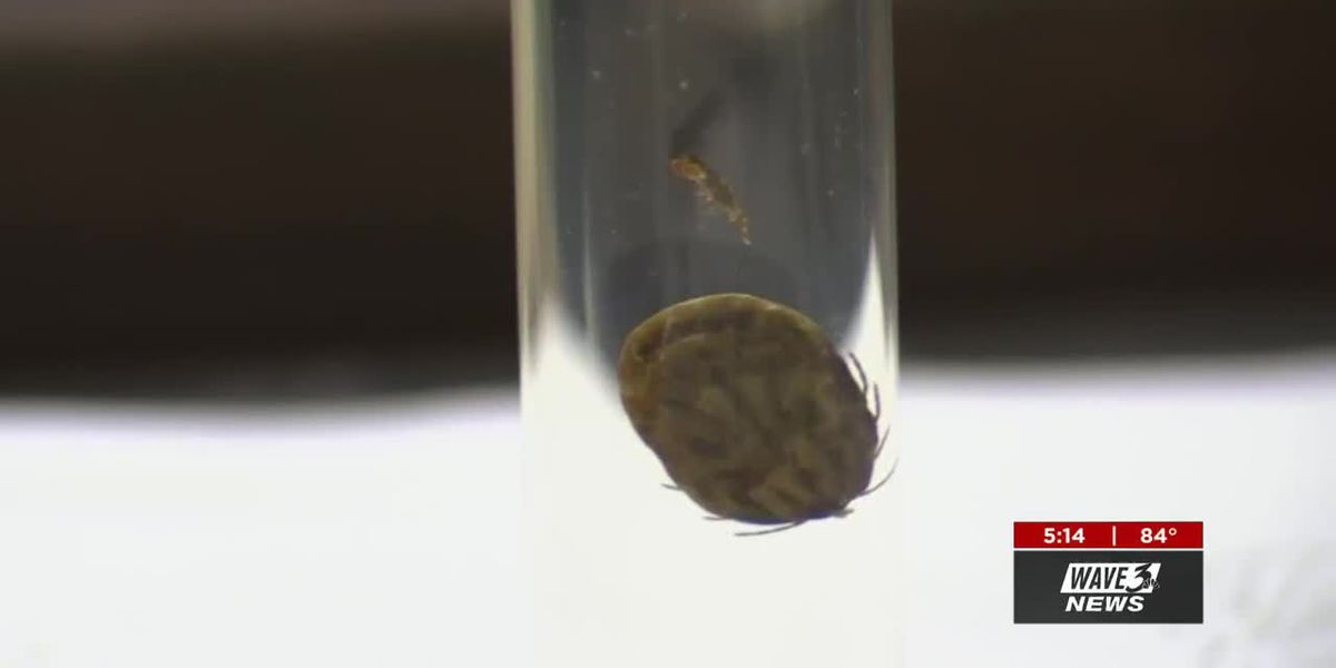 New tick discovery in Kentucky brings new risks