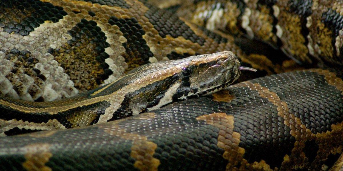 Popular python dies at Louisville Zoo