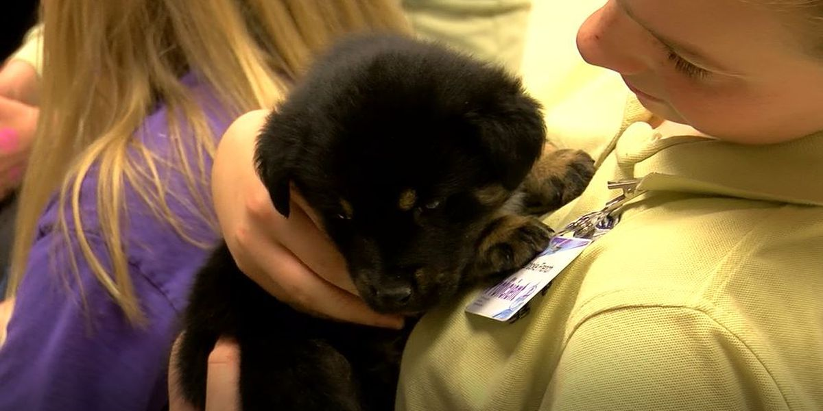 Olmsted Academy South students organize Puppy Room fundraiser