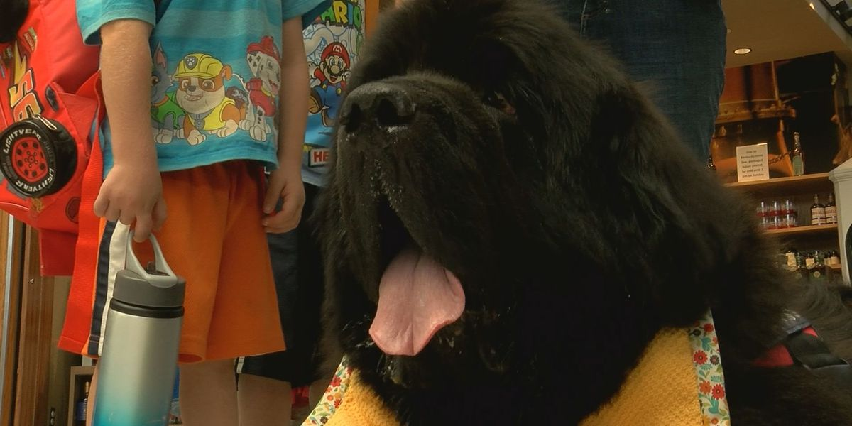 Airport adds animal therapy program enhance traveling experience