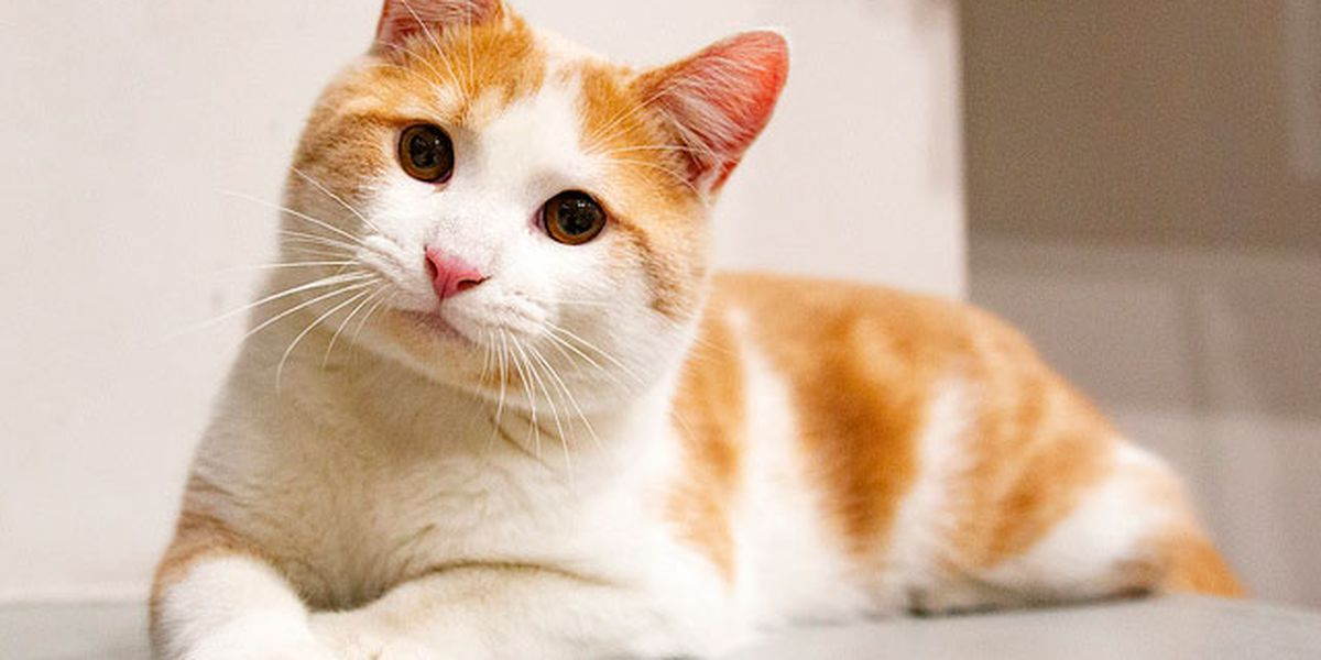 PHOTOS: This week's adorable, adoptable KHS pets