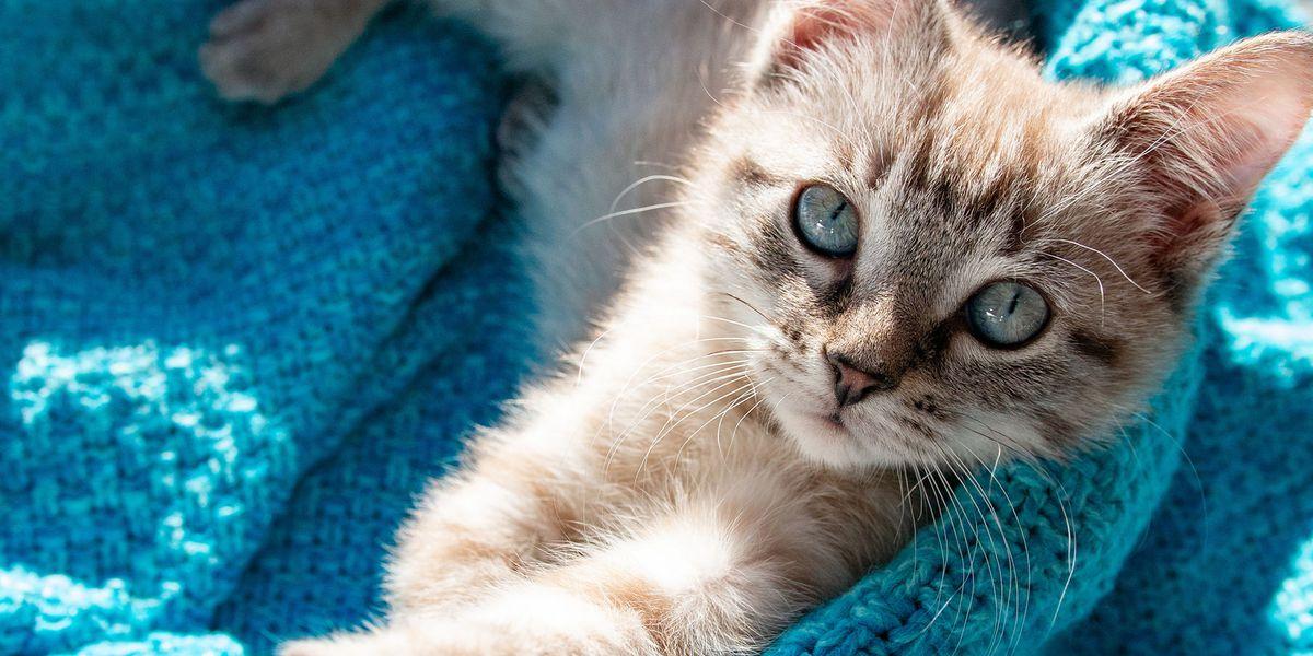 Purrfect Day Cat Café exceeding adoption goals