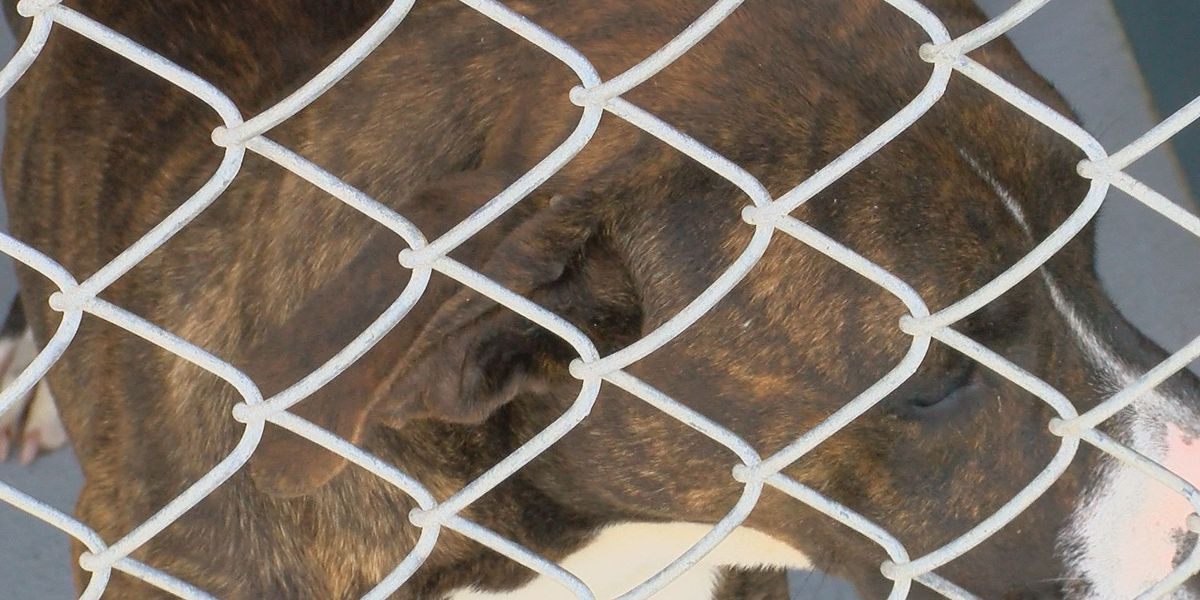 Humane Society of Oldham County announces 'Give Me Shelter' campaign