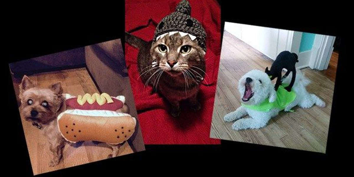 Cast your vote in the WAVE 3 News Howl-O-Ween Pet Photo Contest