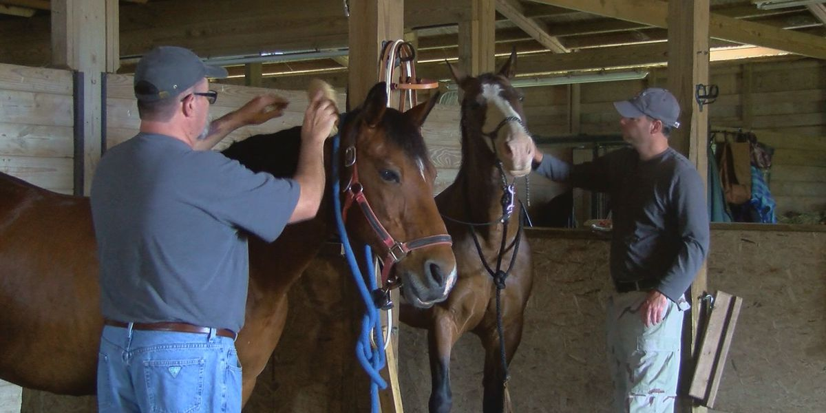 Kentucky Humane Society launches horse help line