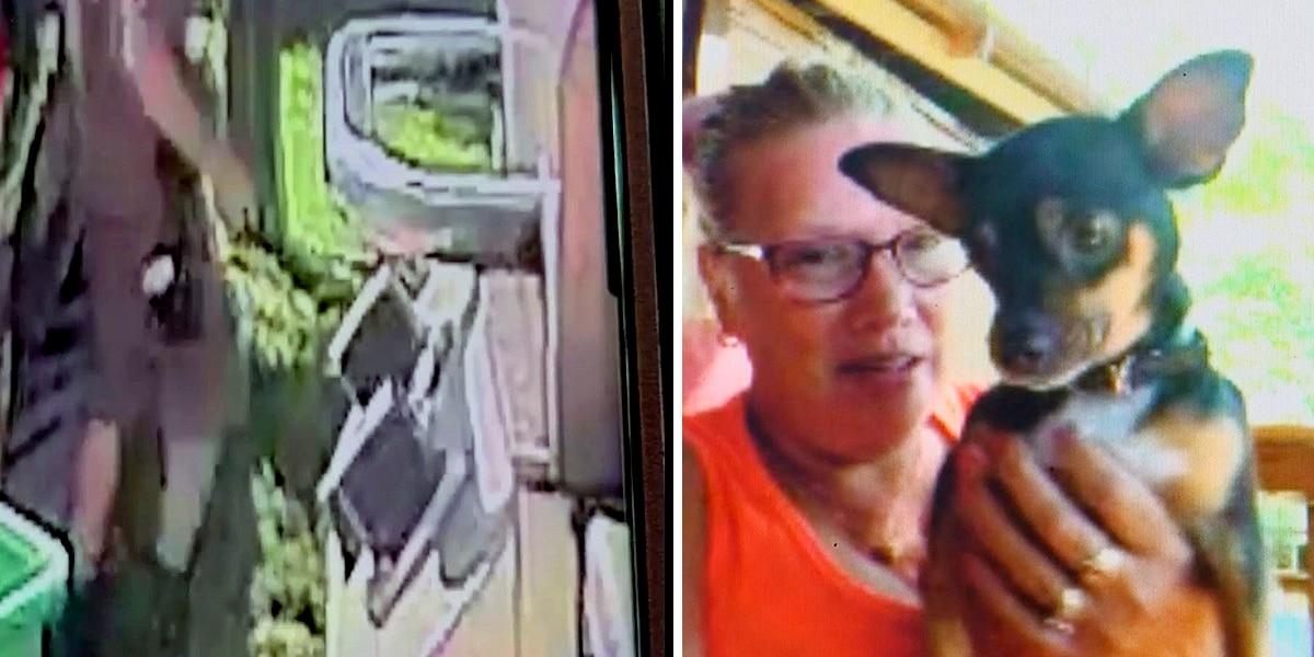 UPS driver caught on camera kicking Okolona family's chihuahua in the face