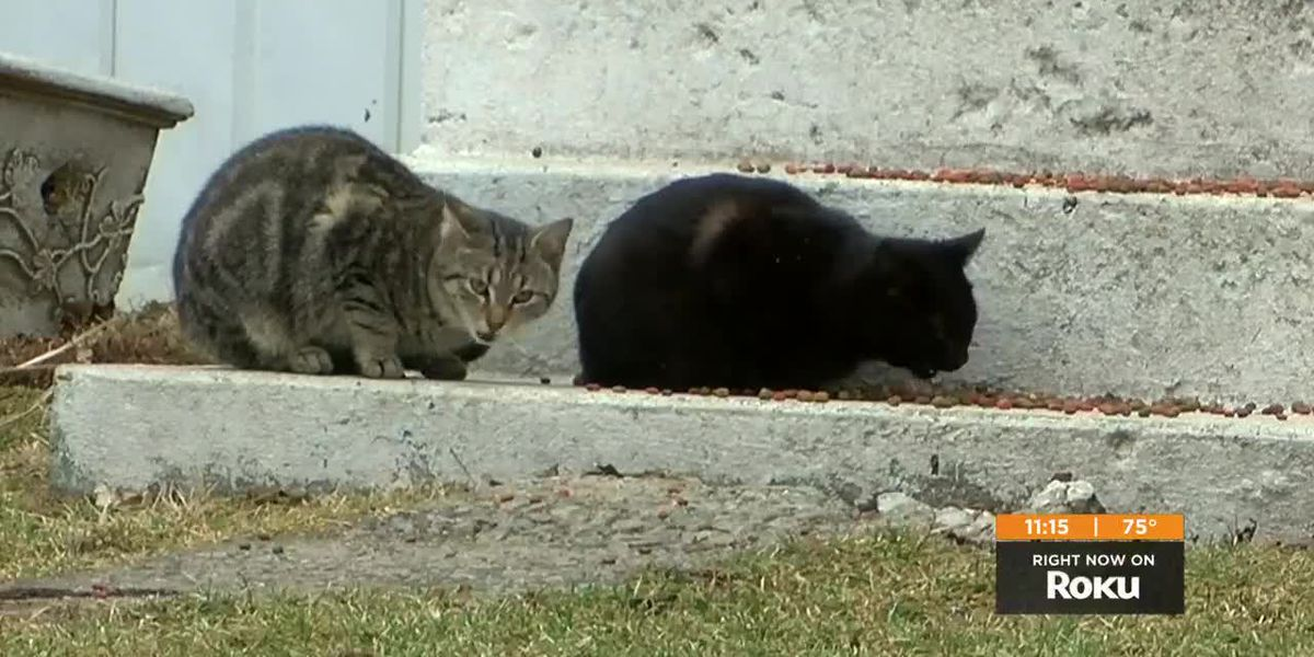 Alley Cat Advocates prepare bigger space to care for stray cats, kittens