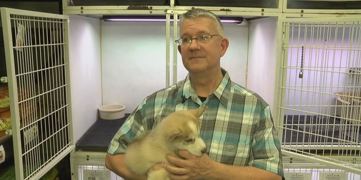 Stolen puppy returned to pet store under mysterious circumstances