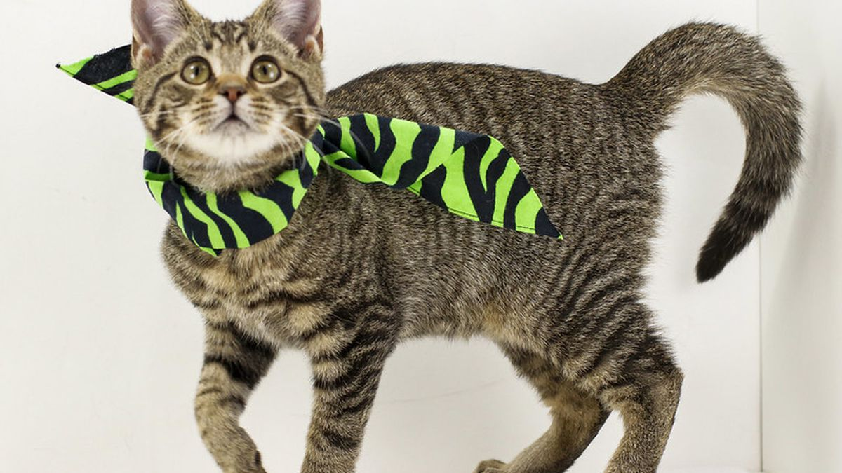 KY Humane Society, Metro Animal Services begin Empty the Shelters event December 13