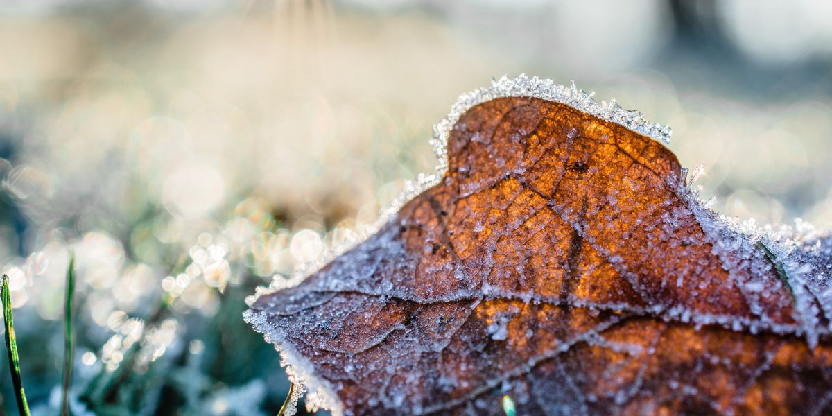 Behind the Forecast: How frost forms