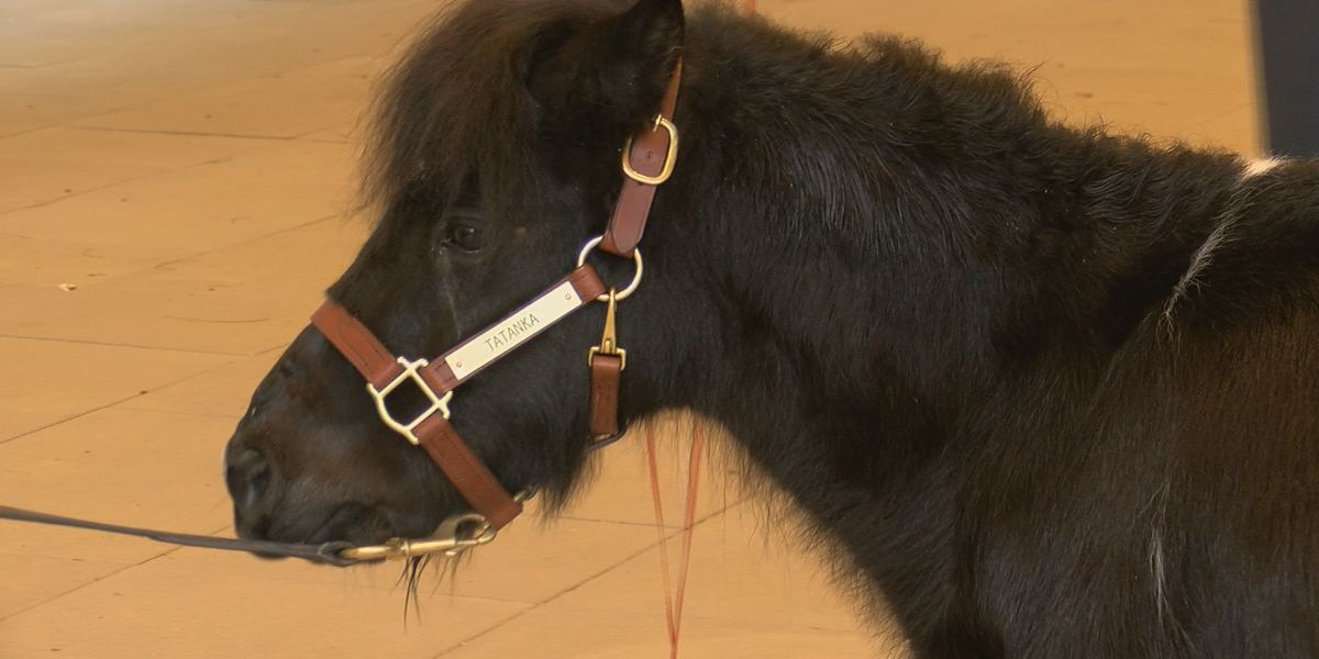 Kentucky Derby Museum holds birthday party for new companion pony