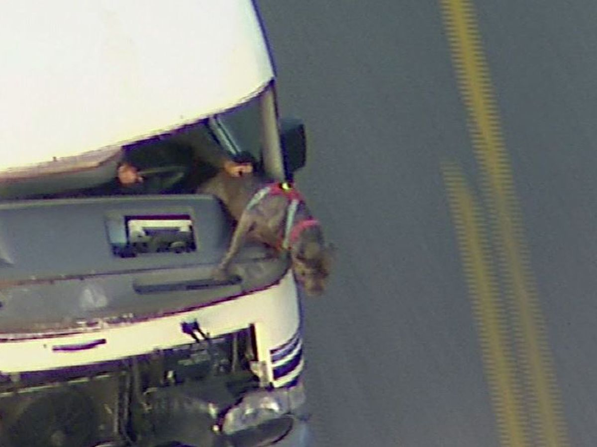 Dog survives leaping from RV during high-speed chase in Los Angeles
