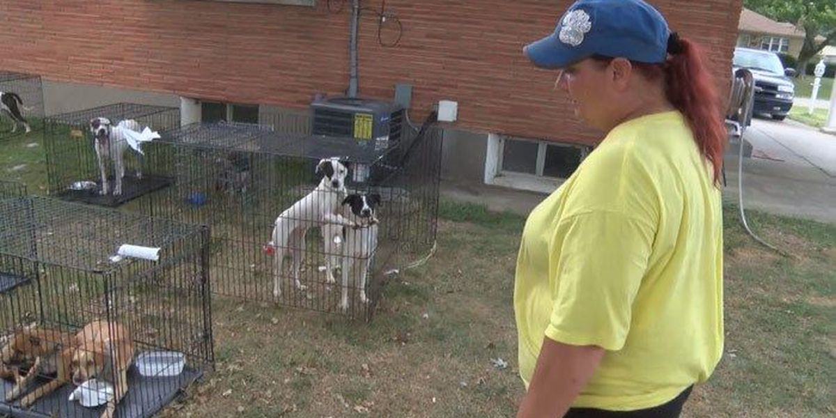 Louisville woman finds new home for Louisiana dogs