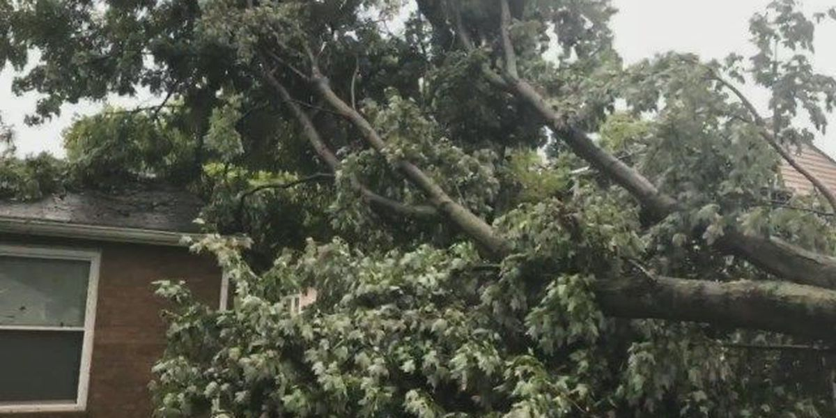 Louisville Metro accepting storm debris for free from residents