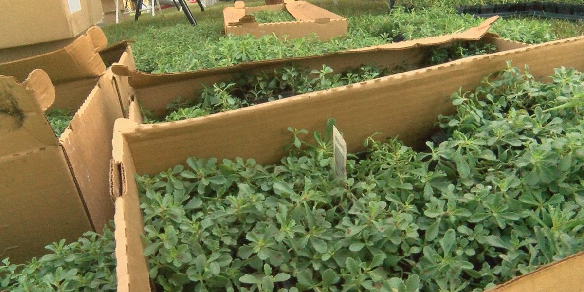 Living Green Wall helping create a healthier Park DuValle community