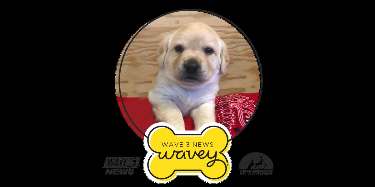 Wavey turns 1!