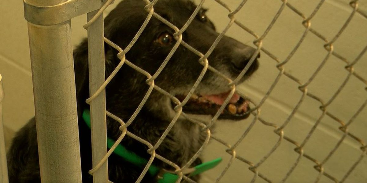 Shelter closed, investigation open at Harrison County Animal Control