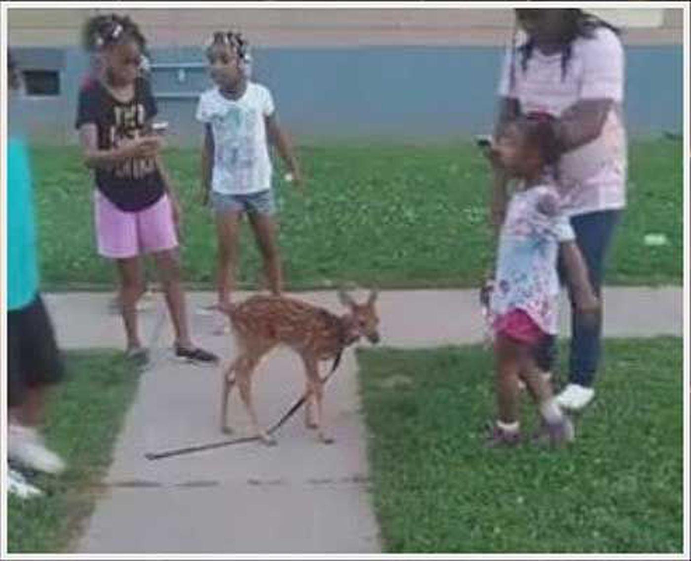 Man puts deer on leash, upsets Kentucky wildlife officials