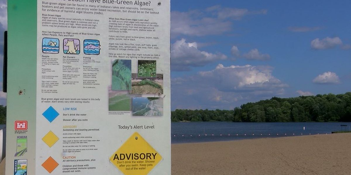 Toxic algae that killed at least 5 dogs found in some Indiana lakes