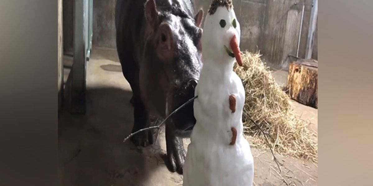Fiona and friends enjoy their time with the snow