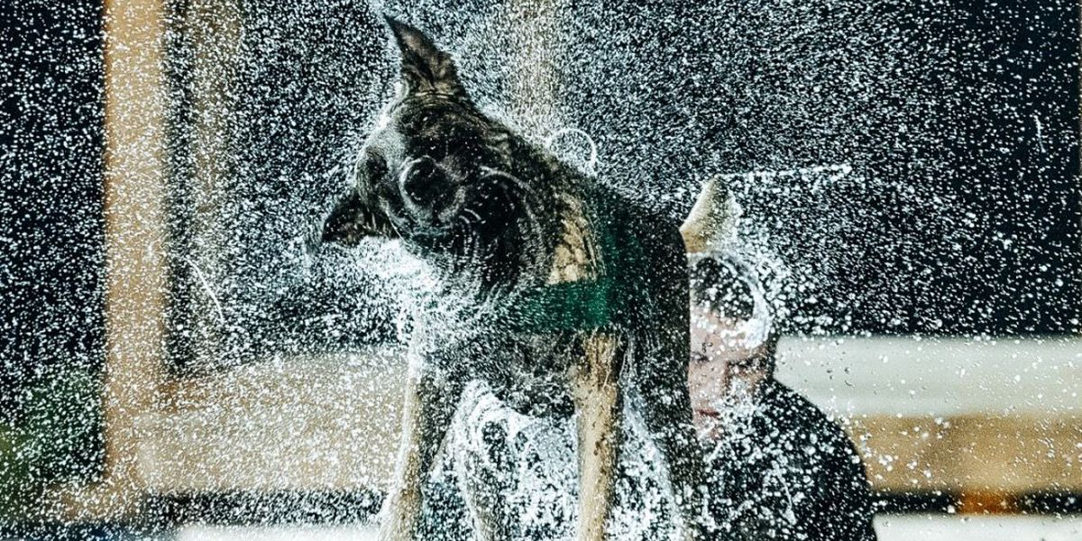 Clark County K-9 featured in A&E's 'America's Top Dog'